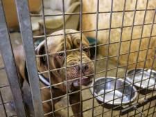 Hondenopvang Stella kan in alle rust vooruitkijken in Tollebeek