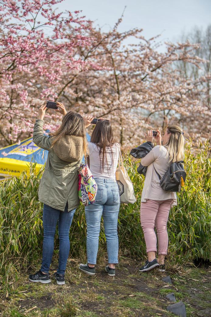 Kersenbloesem is erg fotogeniek. Deze vrouwen genieten van de lentepracht en maken een foto.