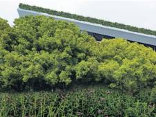 'Verberg SnowWorld achter hoge bomen en hangende tuin'