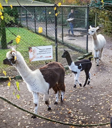 Alpaca's en boshondjes bij Zie-ZOO hebben weer bekijks