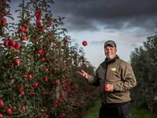 De golden delicious is uit, we willen tegenwoordig een hard, rode en volzoete appel