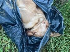 Un chien retrouvé dans un sac-poubelle près de Liège