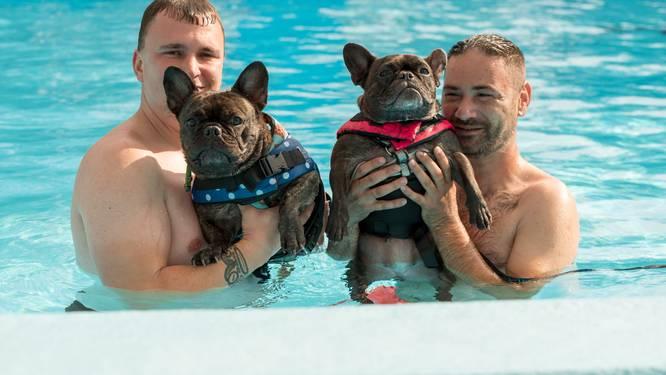 Honden gaan helemaal los in zwembad De Spetter
