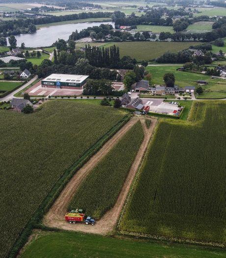 Overheid dwingt Achterhoekse en Liemerse boeren onrijpe mais te oogsten