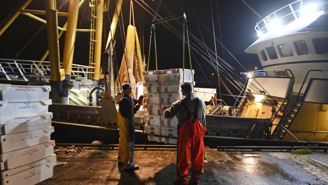 Coronavirus duwt Vlaamse visvangst naar dieptepunt