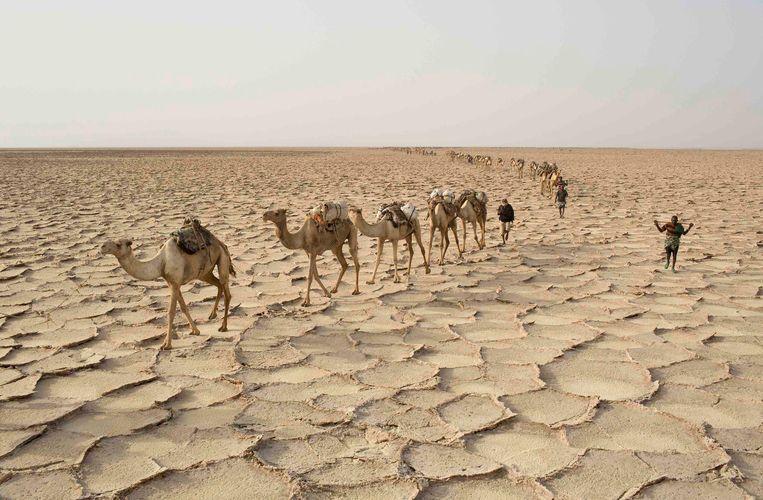 Een woestijn in Ethiopië Beeld REUTERS
