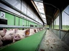 Sterksel heeft het nakijken: bijna zeker dat onderzoekscentrum varkens blijft