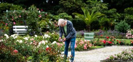Bezoekers kasteeltuin Middachten overweldigd door rozenpracht