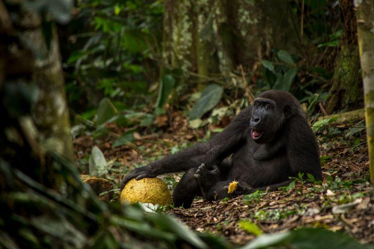 null Beeld Wildlife Photographer of the Year Award