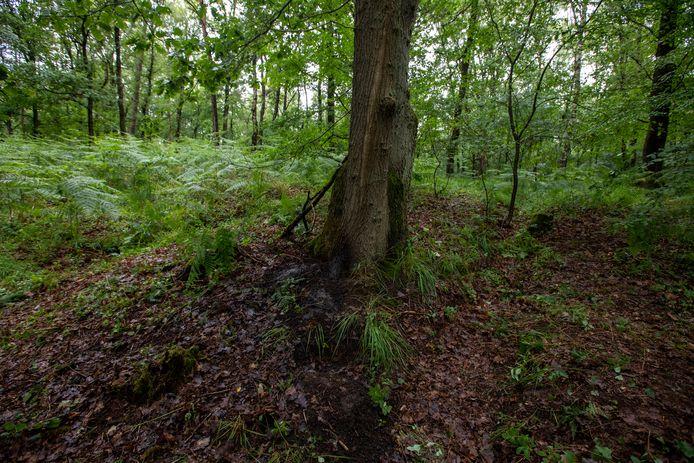 Op de plaats waar Jürgen Conings werd gevonden, is nog steeds een afdruk van het lichaam te zien.