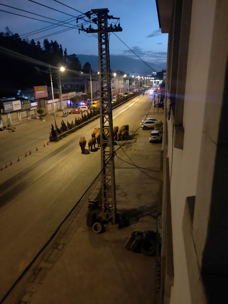 De kudde verkent de stad Eshan.  Beeld via Reuters
