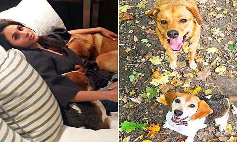 Meghan Markle en haar honden.