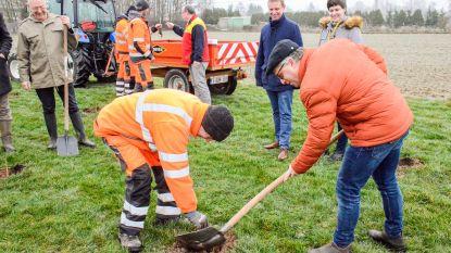 DHL sponsort aanplanting 120 boompjes: eentje voor elke vrachtwagen die het bedrijf uitstuurt