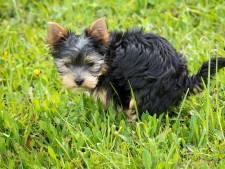 Altena: plastic zakjes voor hondenpoep echt beter
