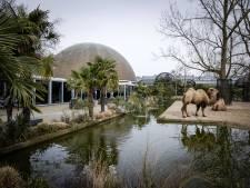 Steunpakket voor dierentuinen: ook Artis doet aanvraag