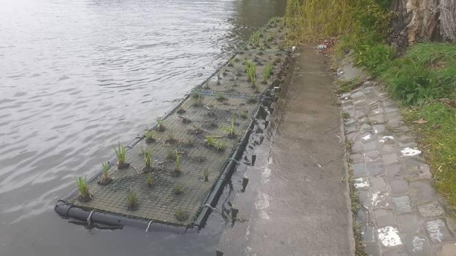 In 2003 al getest, maar nu opnieuw als 'proefproject': drijvende groeneilandjes op de Watersportbaan