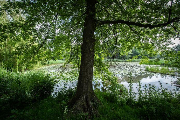 De vijver in het Van Sonsbeeckpark in Breda, B. dreef zijn slachtoffer na de laatste verkrachting in 2017 deze vijver in. Ze moest zich 'ook van binnen' wassen om zijn sporen te wissen.