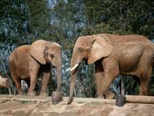 Nouveau sursis pour deux éléphantes à Lyon