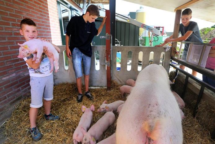 Bij 'Brand Pigs' zijn de biggetjes het populairst tijdens de Toer de Boer. foto ramon mangold/pix4profs