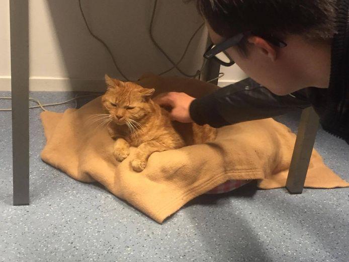 Max ontmoet Garfield, de huiskat van het politiebureau.