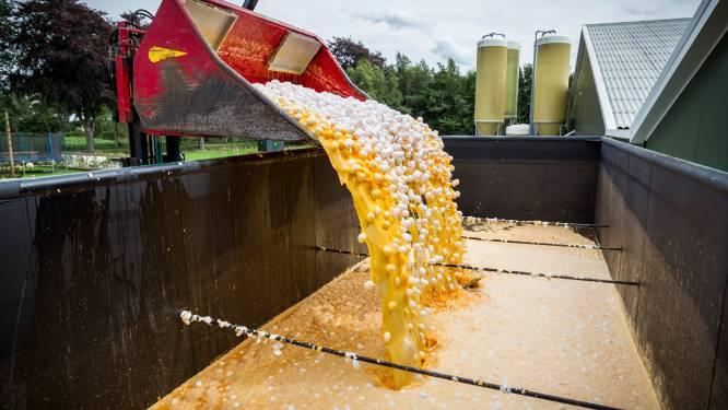 Overheid hoeft gedupeerde boeren na fipronilcrisis geen schadevergoeding te betalen