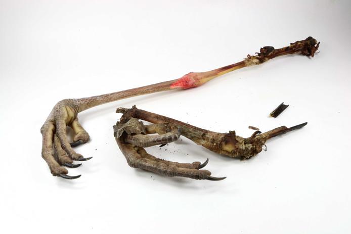 Ook de poten van de blauwe reiger, die werd opgegeten door een dakloze, zijn te zien in het Natuurhistorisch.