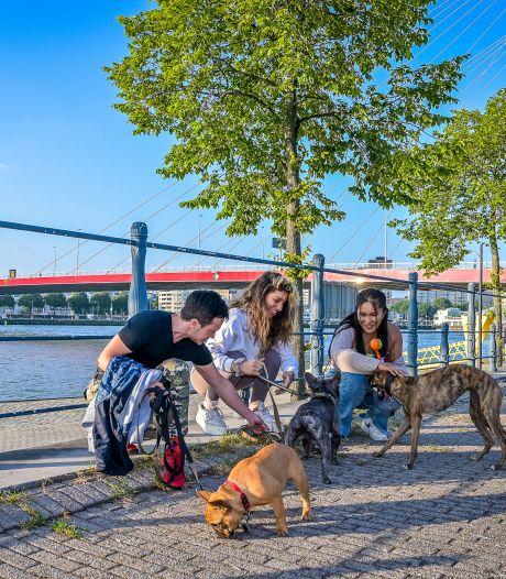 Verkoeling en lekker spetteren: de Franse bulldog Biggie Smalls zou meer zwemplekken geweldig vinden