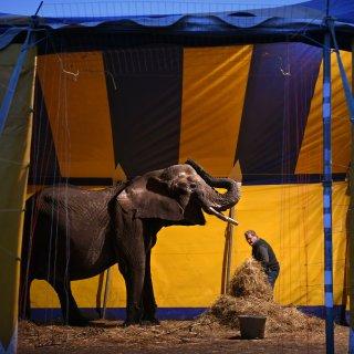 Olifant Buba mag bij circusfamilie blijven, dierenactivisten dreigen met juridische actie