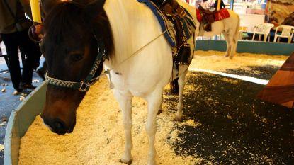 Geen ponykraam meer op de Oktoberfoor in Oostende