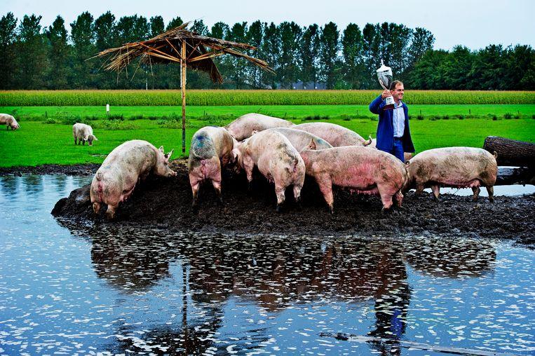 Een biologische varkenshouderij. Boer Frank van Wagenberg uit Esch won ooit de trofee van Wakker Dier voor 'de mooiste modderpoel' Beeld ANP