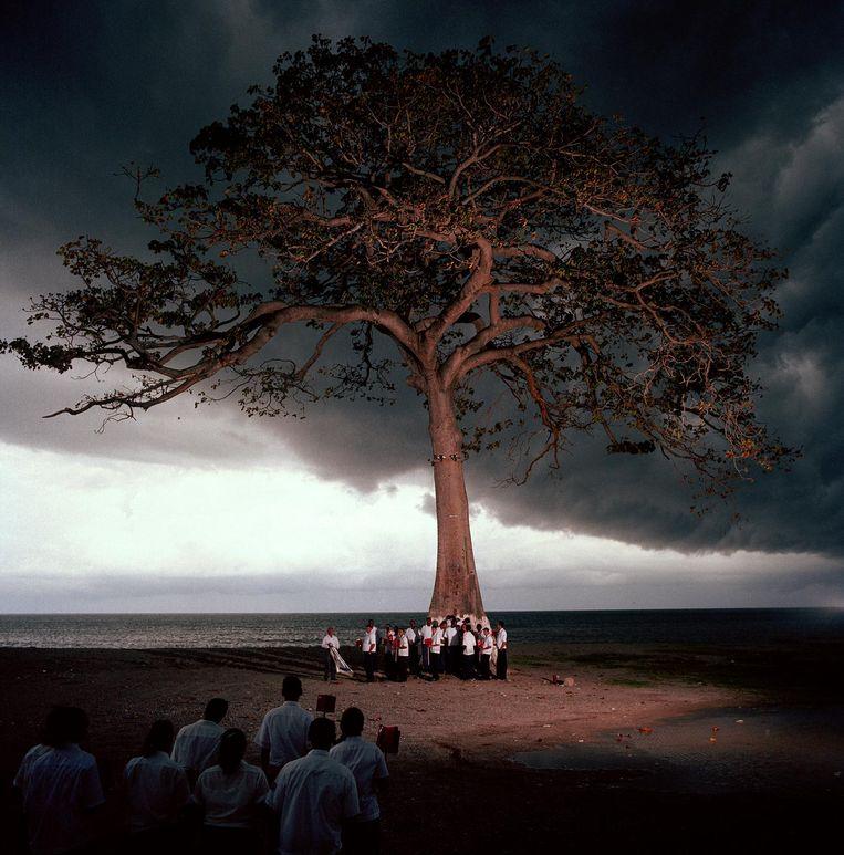 De boom Beeld null