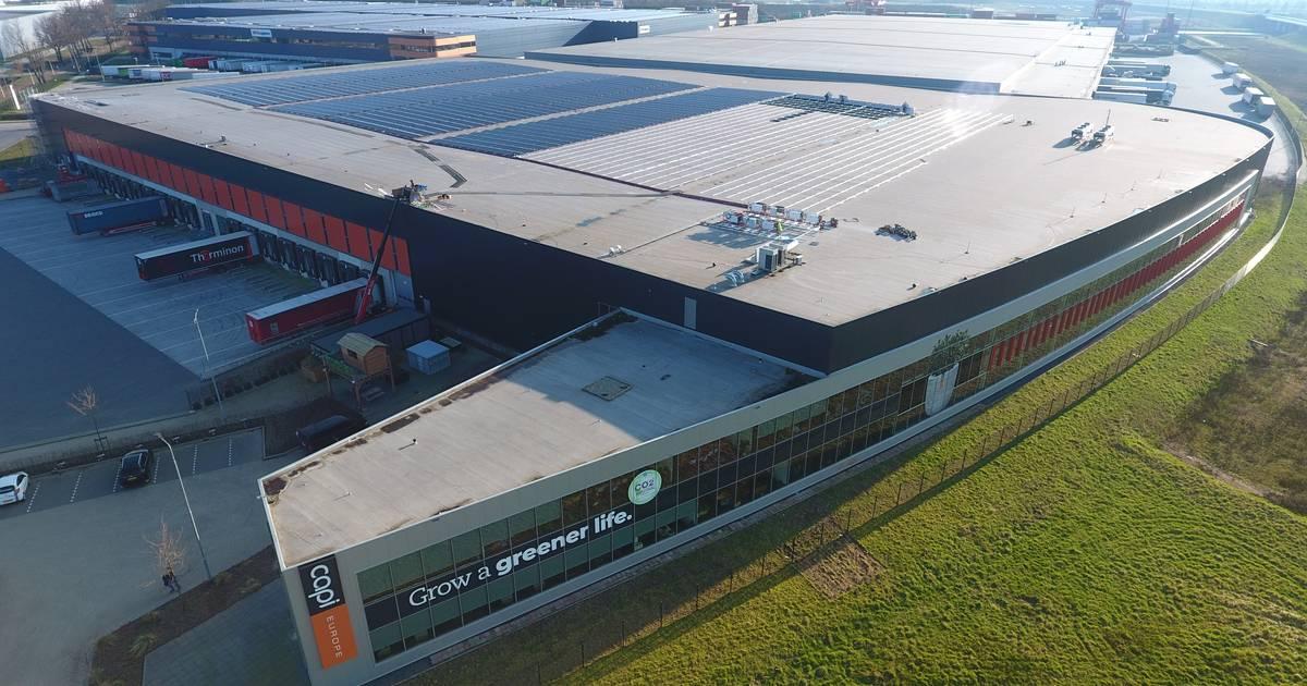 Potentie zonne-energie fors onderschat: 'Er is meer mogelijk dan steden denken' - BD.nl