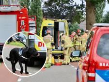 Hond bleef bij bazin na ongeluk in De Lutte: 'Binky slaapt nog steeds op de jas van mijn vrouw'