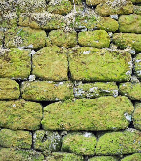 Groene aanslag in de tuin? Laat de hogedrukspuit in de schuur