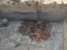 Bijzondere vondst in Tricht: oerbos en nederzettingsterrein van duizenden jaren oud