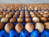 AH haalt 14 eiersoorten uit schappen