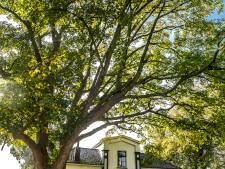 Oproep: help Deventer bomen de droge zomer door