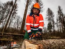 Dode bomen bij Heeten zijn lesmateriaal voor kettingzagers:  'Het is een loeigevaarlijk apparaat'