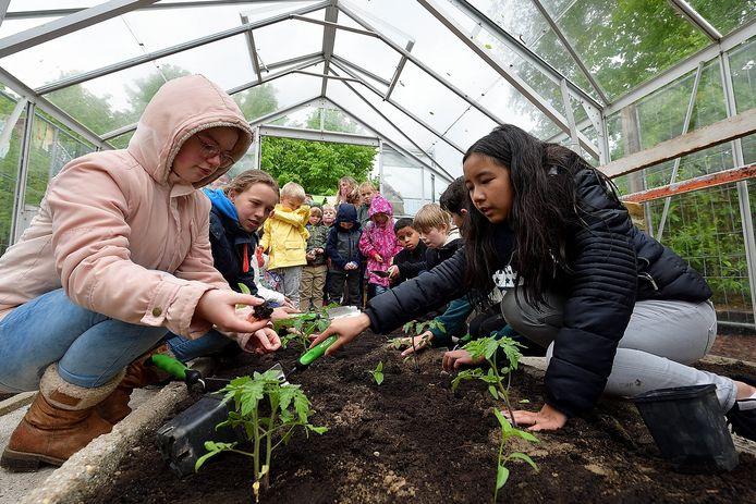 Leerlingen van Zilverlinde in de groentekas op het schoolplein. Foto uit 2018.