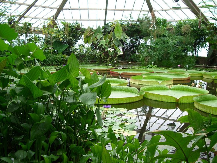 Ga op plantensafari in de Plantentuin van Meise. Beeld Kos