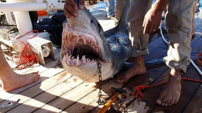 Haai doodt snorkelende Duitse toeriste in Sharm-el-Sheikh