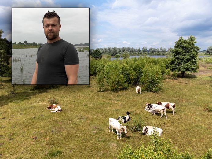 De stieren van boer Jacob van Emst (inzet) vermaken zich prima in de ondergelopen uiterwaarden van de IJssel bij Hattem
