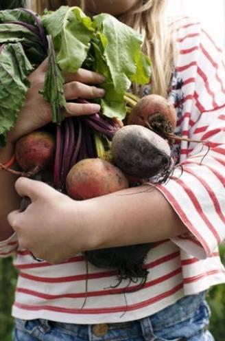 Moestuinieren voor beginners: met deze 5 groente- en fruitsoorten lukt het