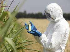 Les cultures OGM ne seraient pas plus dangereuses