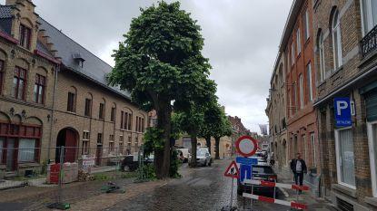 Lindebomen in de Boomgaardstraat blijven staan, mits een extreem zorgvuldige uitvoering van de werken
