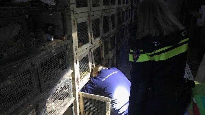 De politie neemt tweehonderd konijnen in beslag.