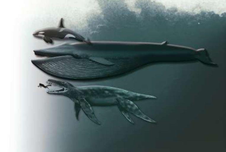 Boven een orka, in het midden een blauwe vinvis en beneden het zeereptiel. Beeld