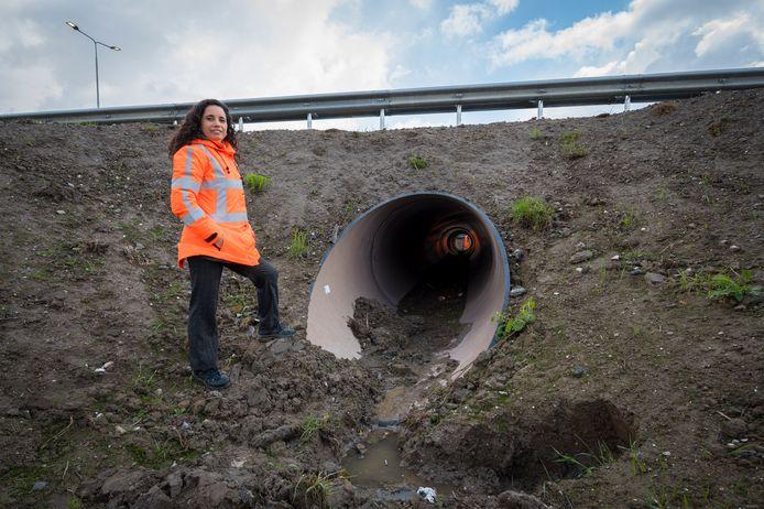Ecologe Claudia Rodrigues van Rijkswaterstaat: ,,We proberen te denken zoals dieren dat doen.''