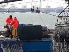 Onderzoek naar de mogelijkheid om mosselen en oesters voor de Zeeuwse kust te kweken