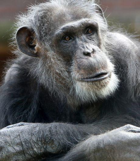 Doodgeschoten chimpansees Mike en Karibuna ontsnapten door menselijke fout, bevestigt onderzoeksbureau